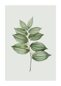 Pastel Botanic 4  Prints Botanical prints