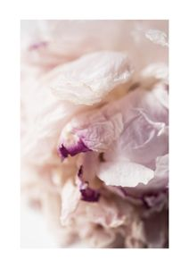 Peony Abstract  Affiches Botanique