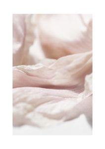 Petal Abstract 2  Prints Botanical prints