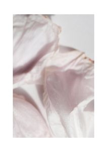 Petal Abstract  Prints Botanical prints