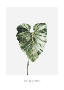 Philodendron Leaf  Prints Botanical prints