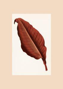 Red Leaf Vintage  Prints Vintage