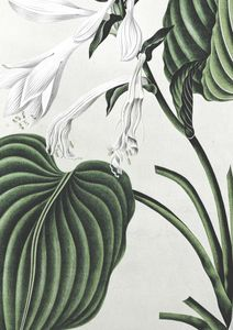 Refurnished Vintage Plant  Prints Botanical prints