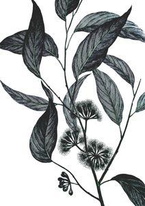 Refurnished Vintage Wild Eucalyptus  Affiches Vintage