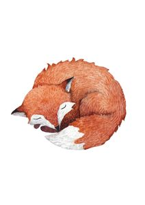Sleeping Fox  Affiches Posters pour enfants