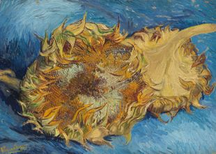 Sunflowers By Van Gogh  Prints New In