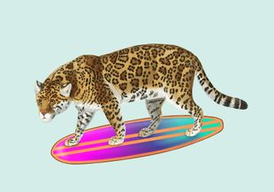 Surf Tiger  Posters Posters för barn