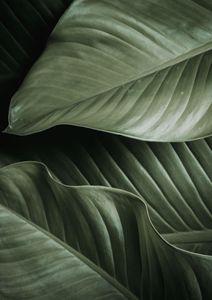 Thick Leaves  Posters Botaniska Motiv