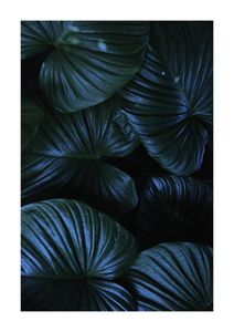 Tropical Night  Posters Natur & Landskap