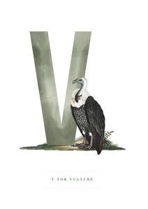 V For Vulture  Posters Posters för barn