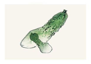 Vintage Cucumber  Posters Vintage