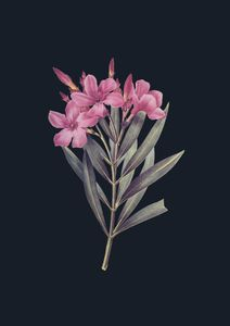 Vintage Flower In Dark 2  Prints Vintage