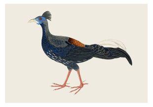 Vintage Pheasant  Affiches Vintage