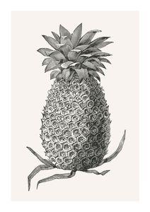 Vintage Pineapple  Prints Botanical prints