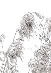 Winter Reed 1  Prints New In