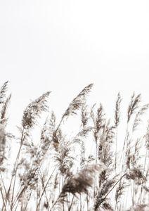 Winter Reed 3  Poster Neuheiten