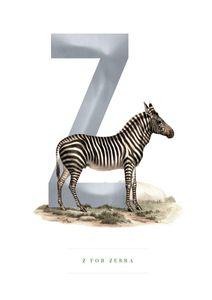 Z For Zebra  Poster Kinder & Jugendliche