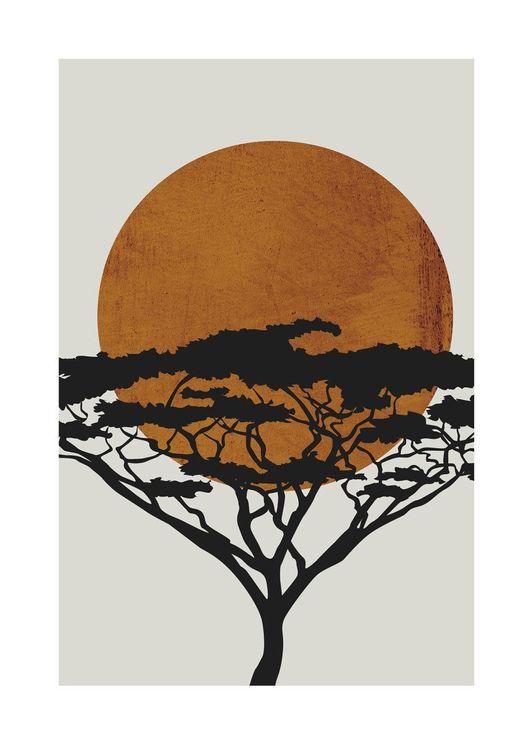 Acacia Sun