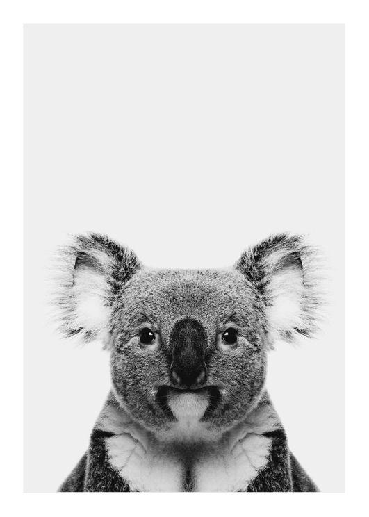 Animal Front Koala
