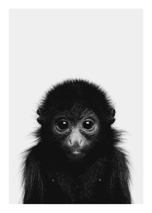 Animal Front Monkey