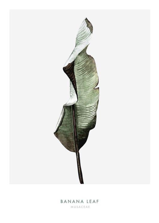 Banana Leaf One