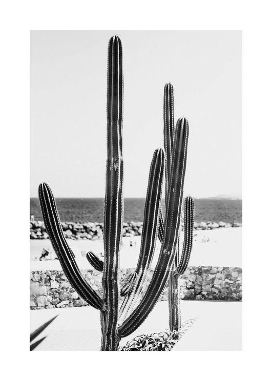 Beach Cactus BW