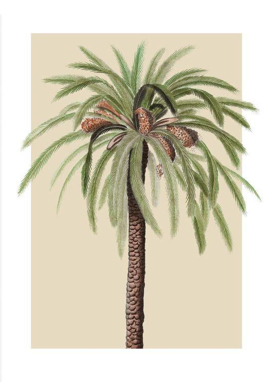 Beige Palm