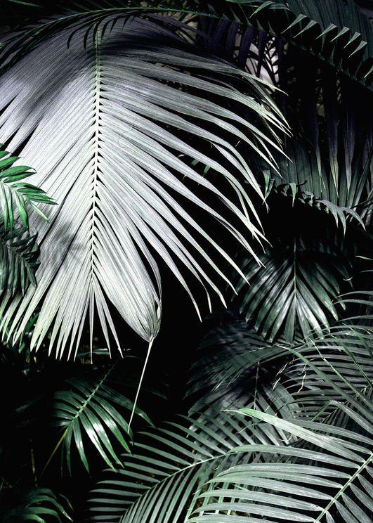 Big Palm Leaves