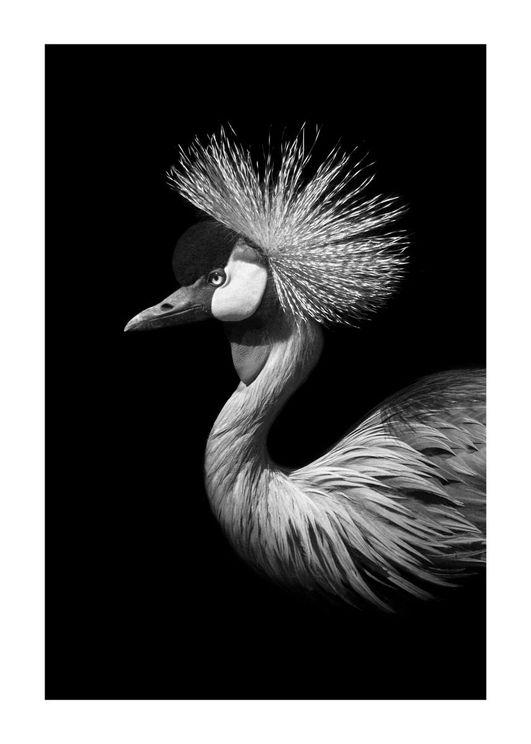 Black Crane