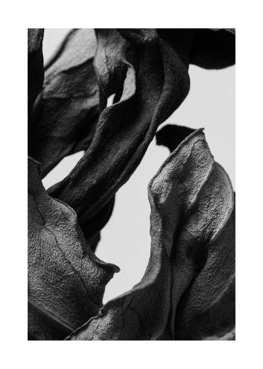 Black Dried Leaves