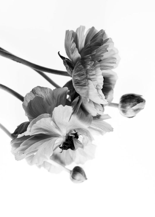 Blossom In BW