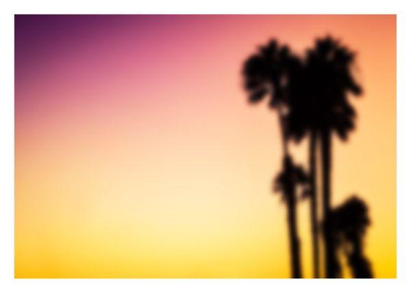 Blurry Palms
