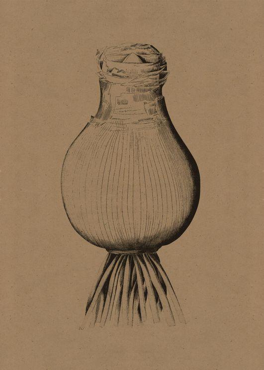 Contrast Onion 2