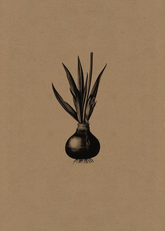Contrast Onion