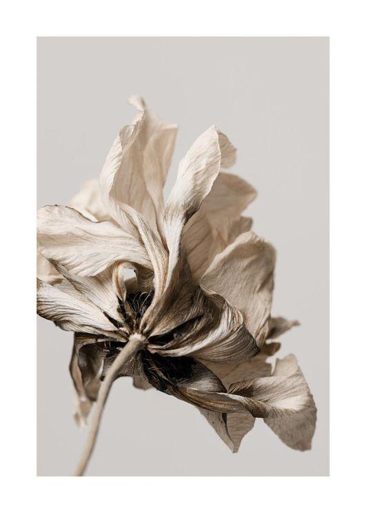 Dried Beige Flower 1