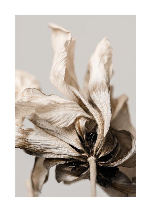 Dried Beige Flower 3