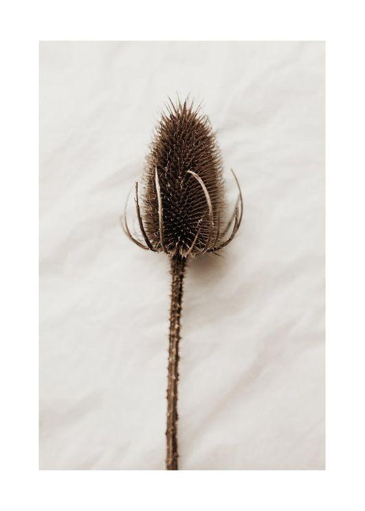 Dried Wild Flower