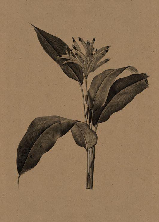 Flower Gravure 1