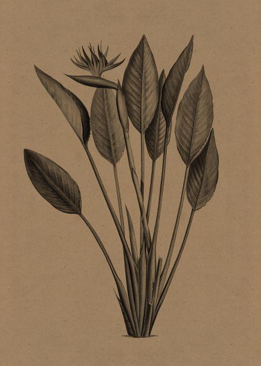Flower Gravure 2