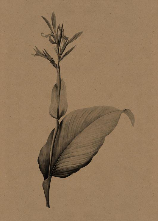 Flower Gravure 4