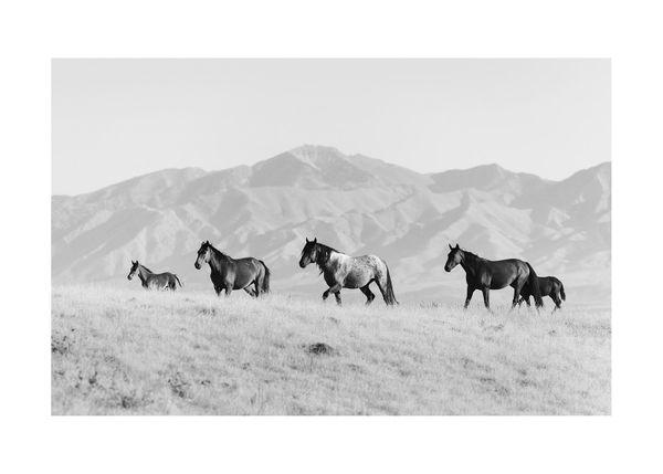 Horses In The Open