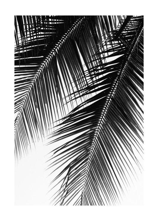Palm Graphic