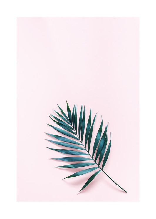 Palm On Pink