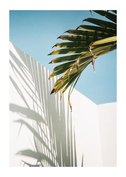 Palm Shadow Wall