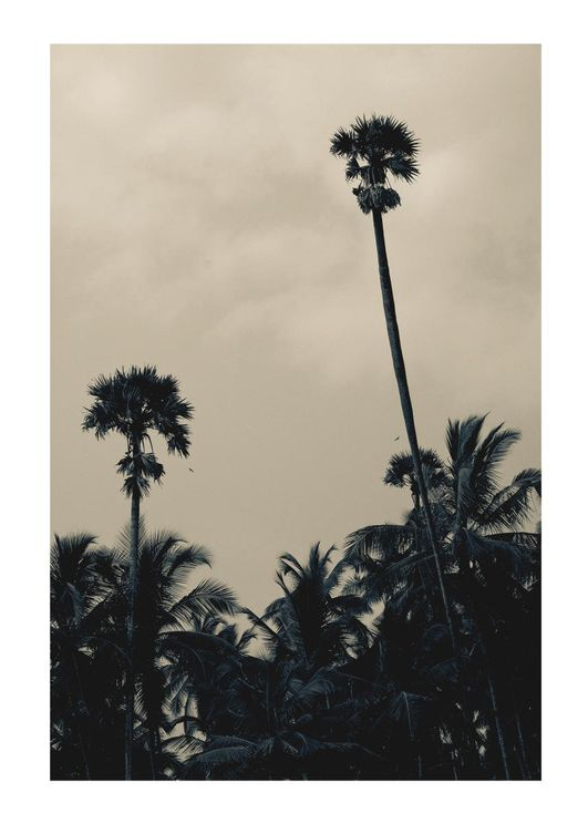 Palms In Bad Weather