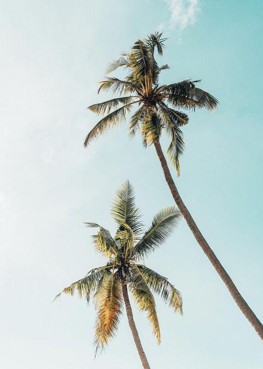 Palmy Sky