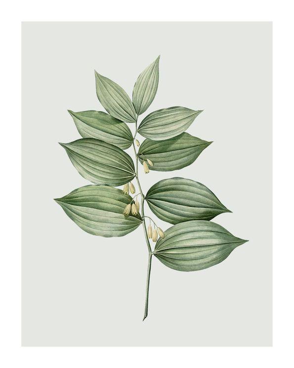 Pastel Botanic 4