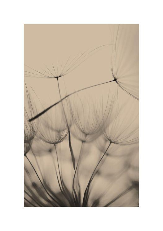 Inverted Dandelion