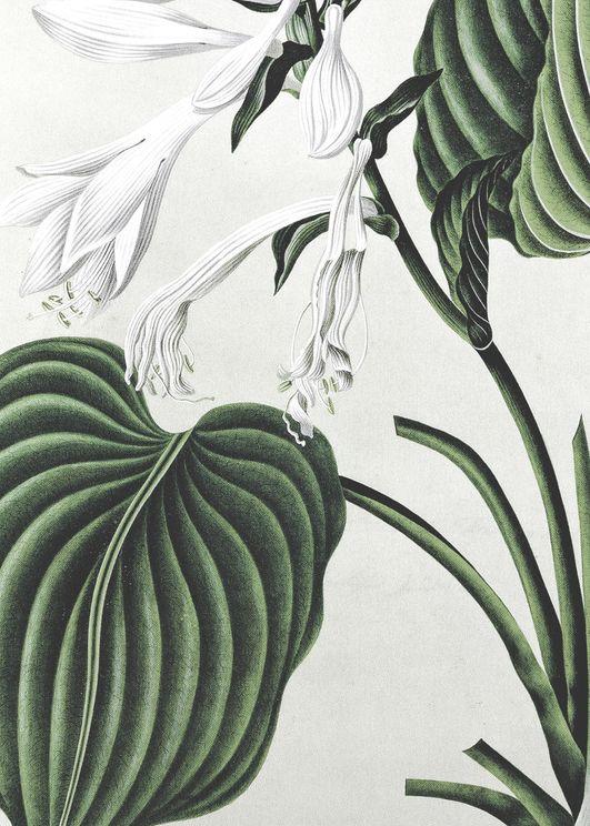 Refurnished Vintage Plant
