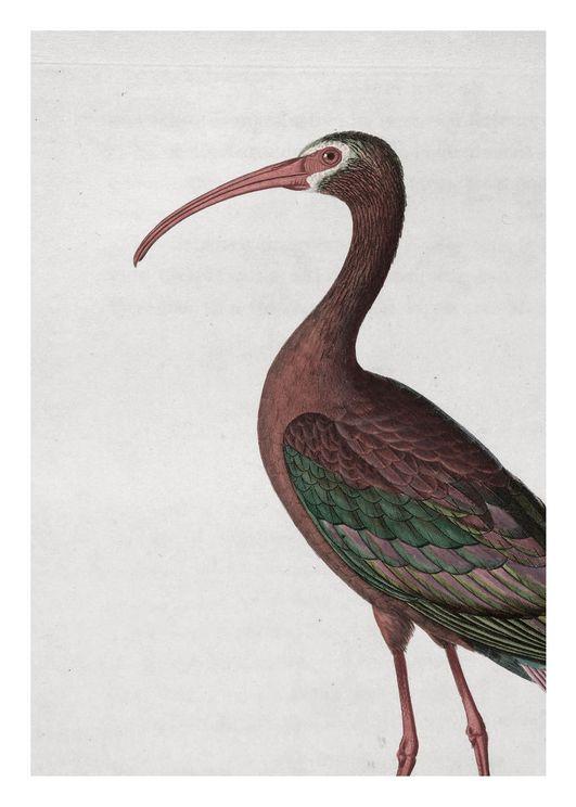 Tropical Bird Vintage